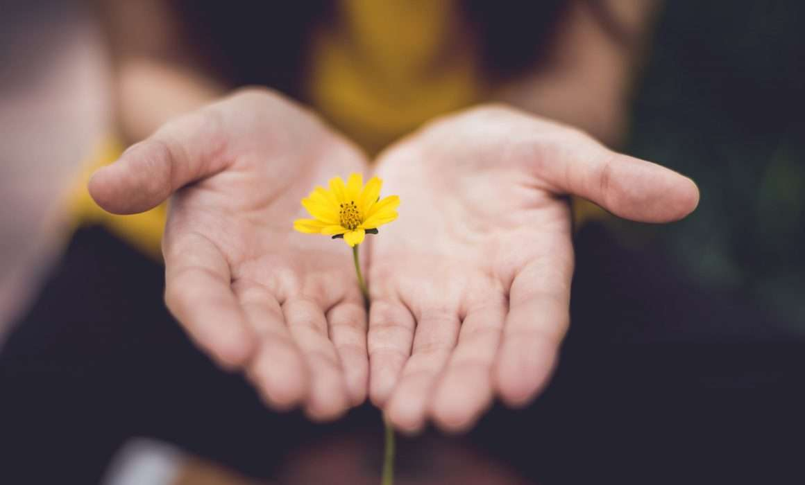 hands-holding-yellow-flower